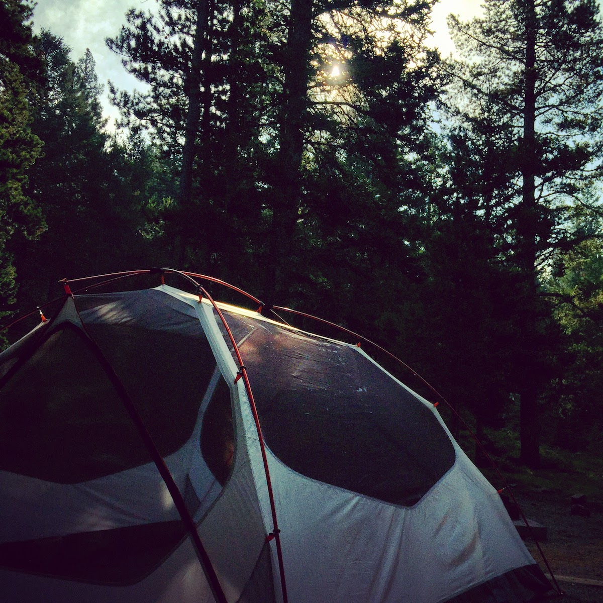 white tent in the forest as sun rises through the pine trees