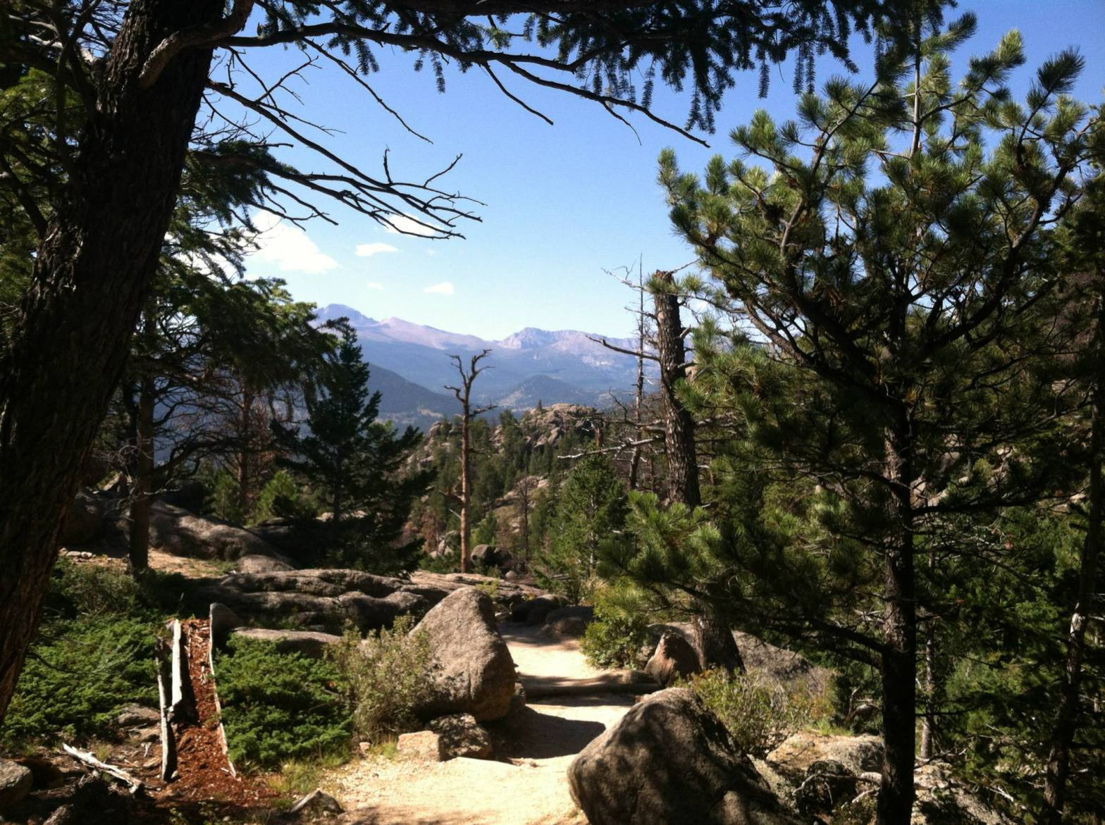 dirt hiking trail surrounded by pine trees looks out at the Rocky Mountains