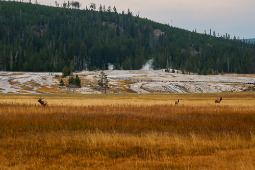 old faithful inn hiking wildlife watching elk fall