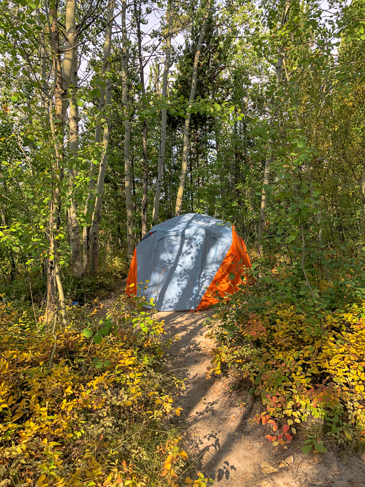 orange tent surrounded by aspen trees beginner camping grand teton