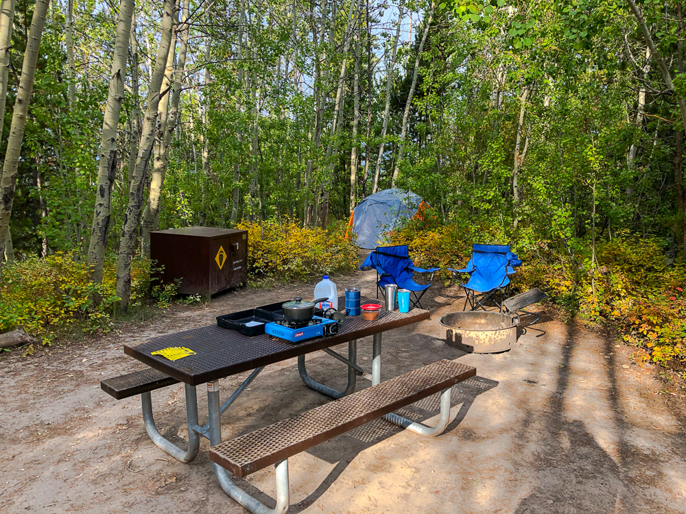 picnic table bear box fire ring and tent surrounded by aspen trees at signal mountain campground in grand teton