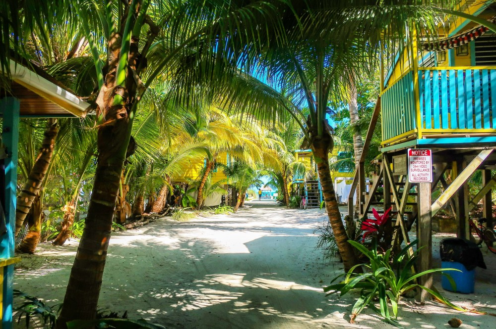 lush palm trees frame a collection of bright blue and yellow cabanas leading to the beach in caye caulker belize