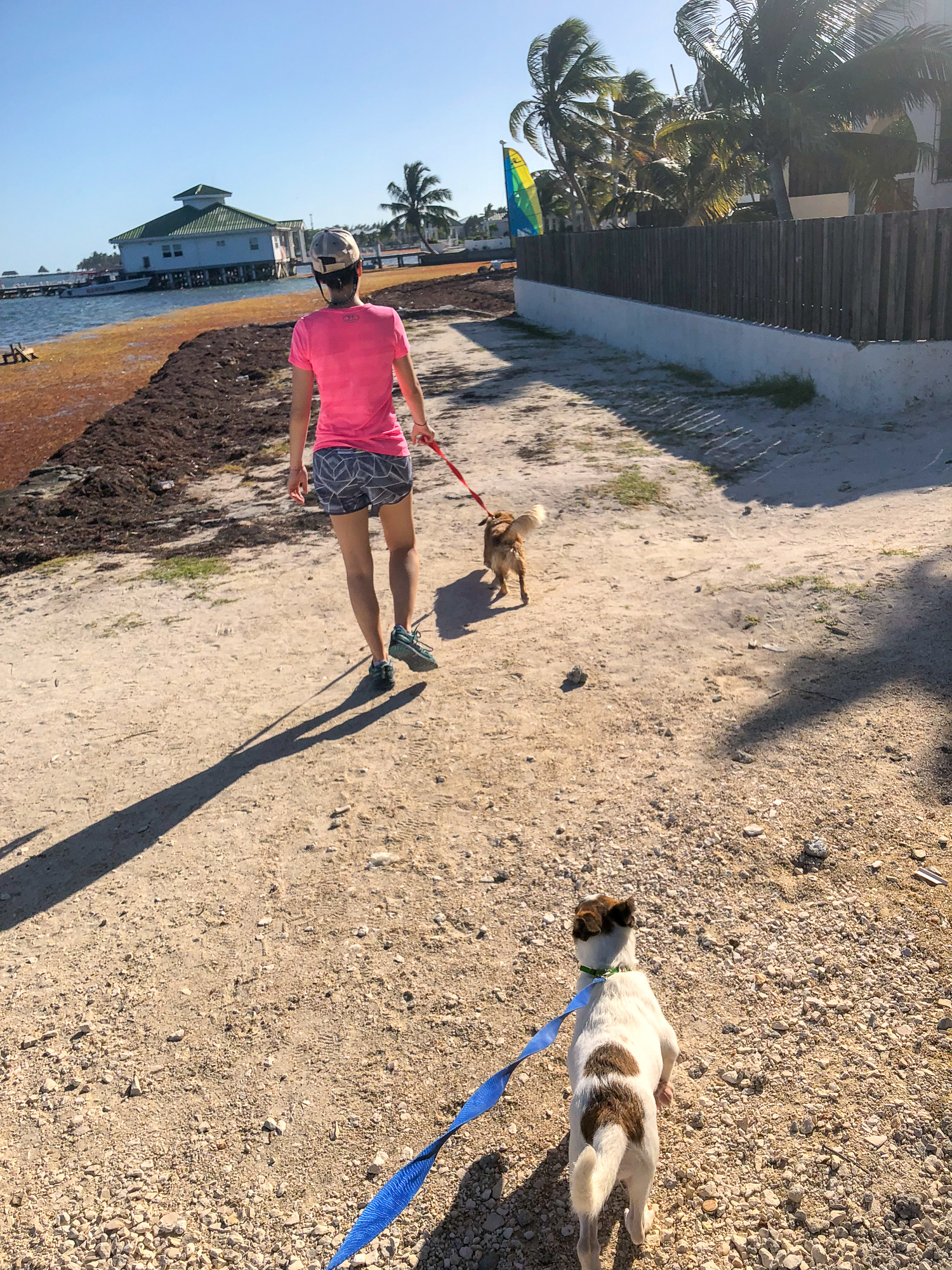 woman walking on the beach of san pedro belize with a small dog from saga humane society